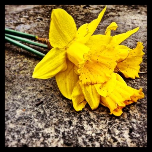 spring has fallen