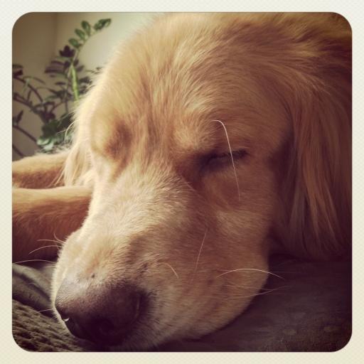 afternoon siesta