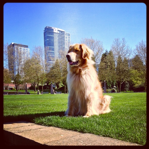 standing guard in the park