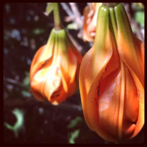 fallen lilies