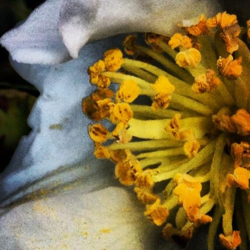 winter pollen